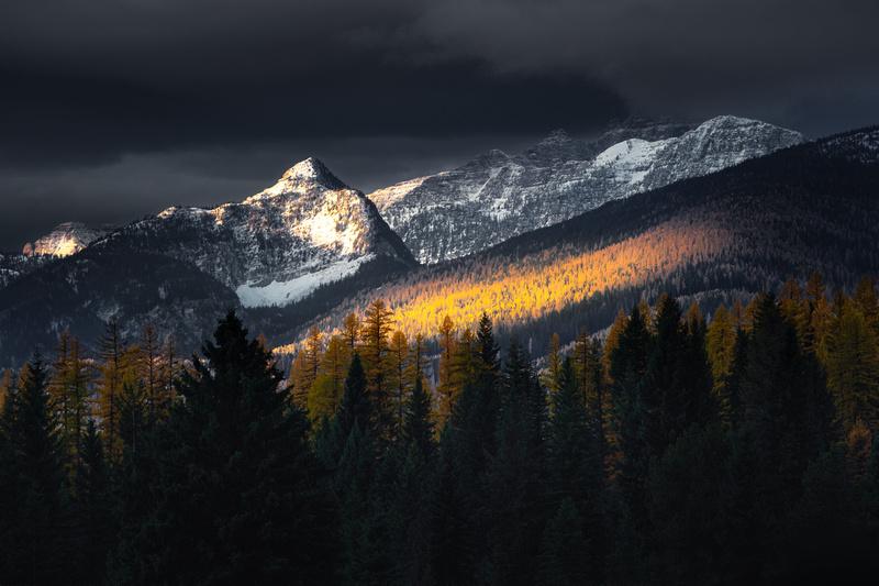 Larch Light | Swan Valley  | MT3
